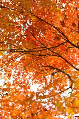 京都1紅葉の名所