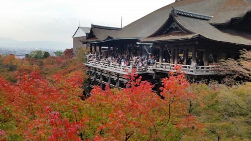 京都清水寺紅葉11月混雑