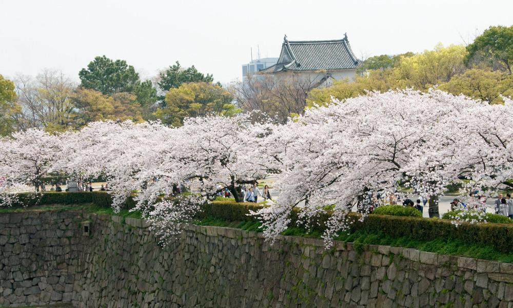 大阪城 お壕の桜